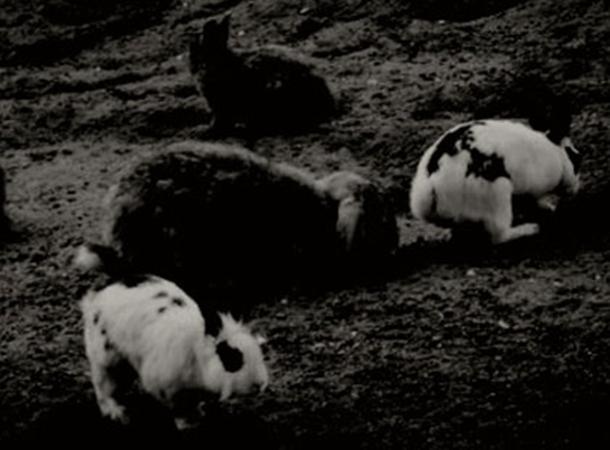 usa_rabbits_dec16