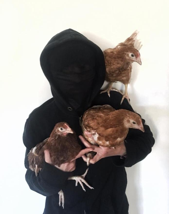 Pollos liberados en solidaridad con Rojava en Reino Unido.