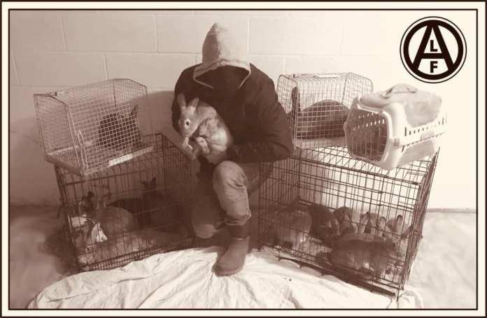 Conejos liberados de una granja