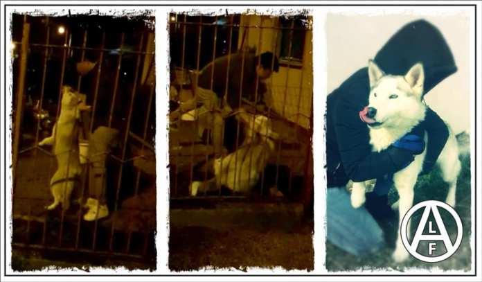 Perro rescatado de su cautiverio en Italia