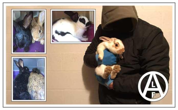 Conejos liberados de un criadero en Italia