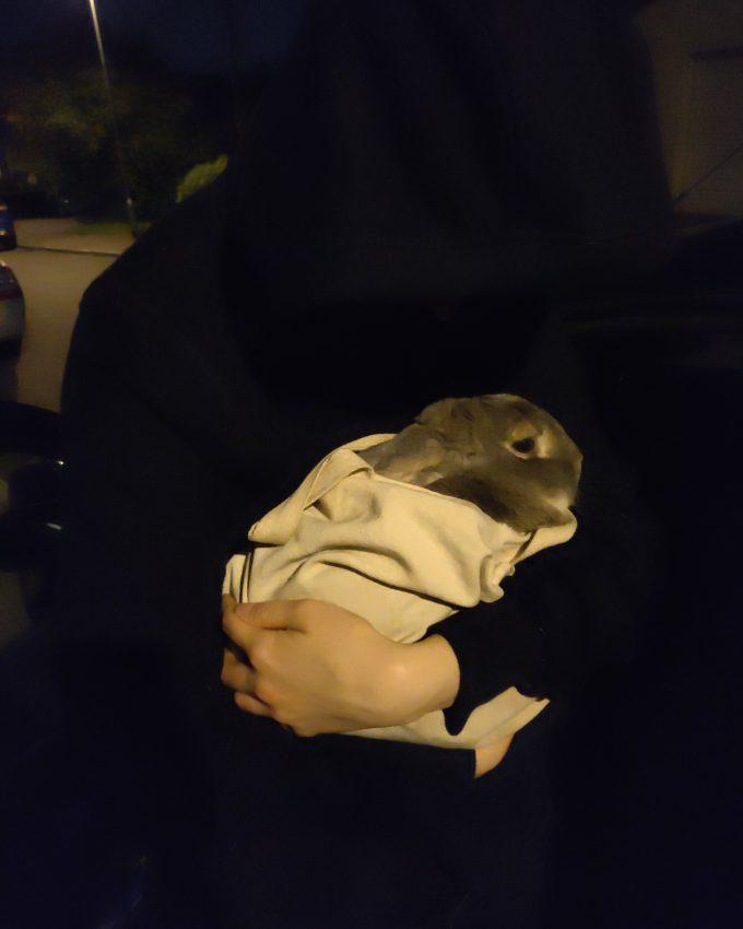 Conejos liberados, Acción dedicada a Eric King en Reino Unido.