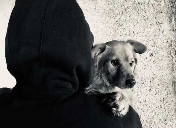 El Frente de Liberación Animal libera un perro de su cautiverio en Italia.1