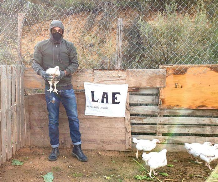 pollos liberados de una granja en Francia.