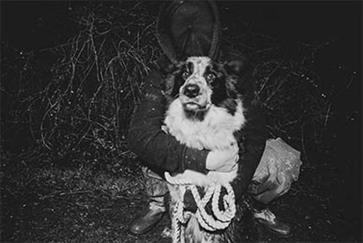 La granjaLittle Oakhurst fue visitada una vez más, Perro pastor liberado en Reino Unido.