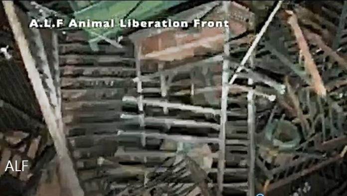 El Frente de Liberación Animal ha liberado 70 patos utilizados como señuelos por los cazadores.