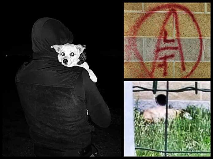 El Frente de Liberación Animal libera un perro de su cautiverio en Italia.